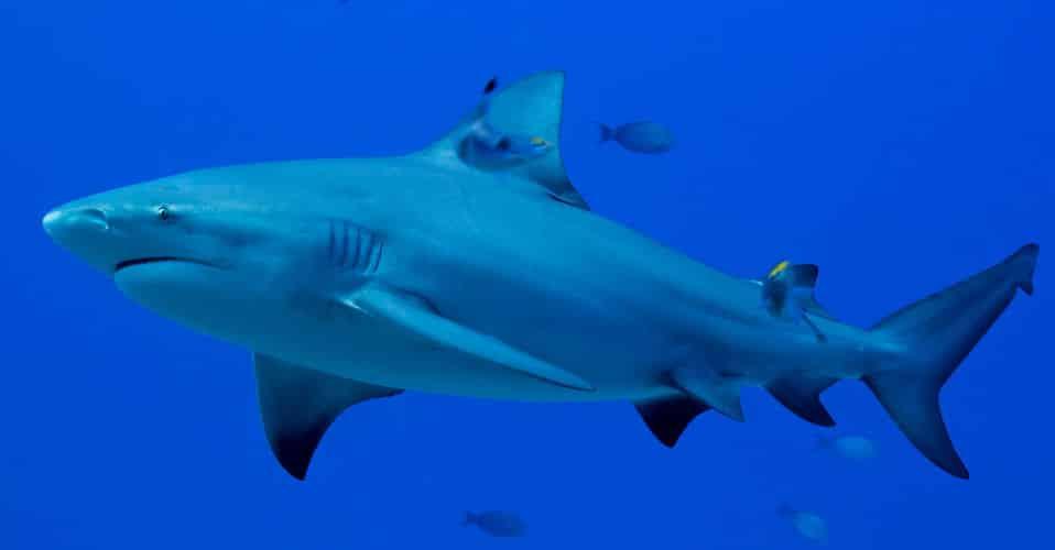 人喰いザメが川で釣れる街に関する雑学