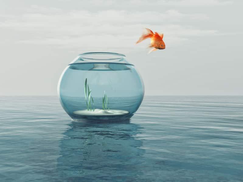 フナに戻る?大量繁殖?金魚は野生では生きていけないのか?という雑学まとめ