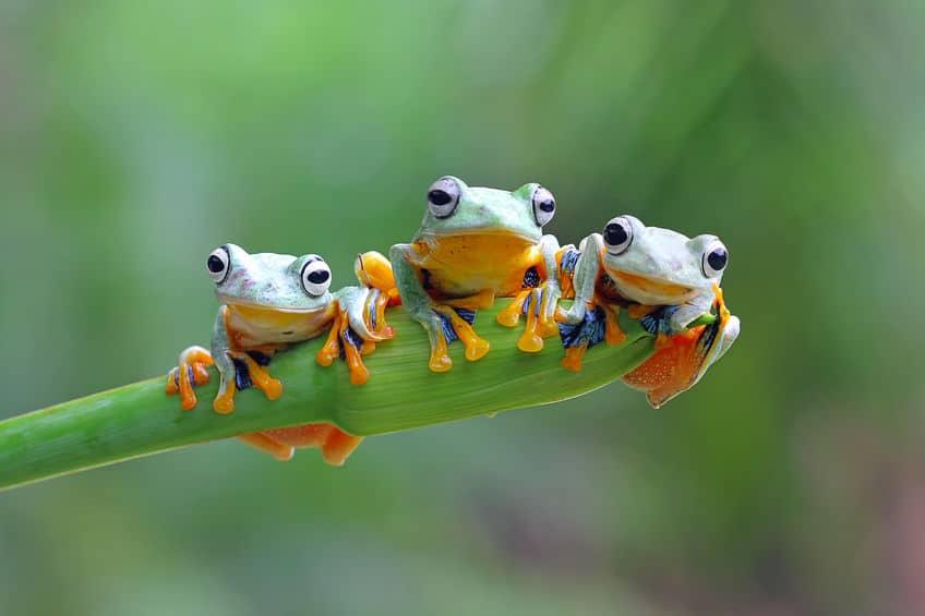 """軽ホラー。カエルは食事をするときに""""目玉""""を使うというトリビアまとめ"""