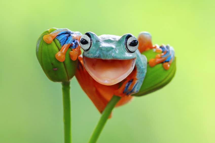 カエルは胃袋ごと吐き出せるというトリビア