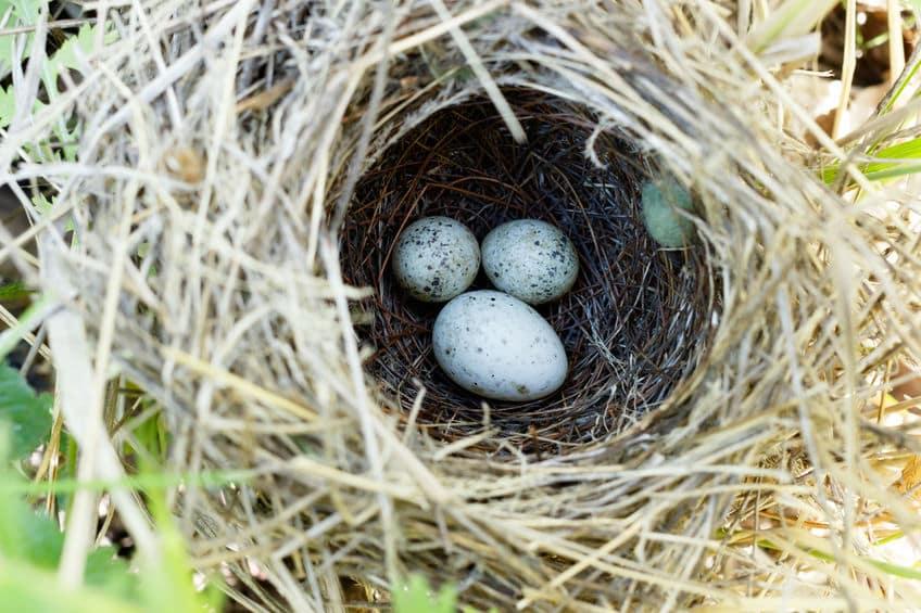 鳥の卵はなぜ楕円形?産みやすいからってホント?についての雑学まとめ