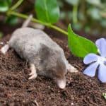 「モグラは太陽に当たると死ぬ」というのはウソ!という雑学