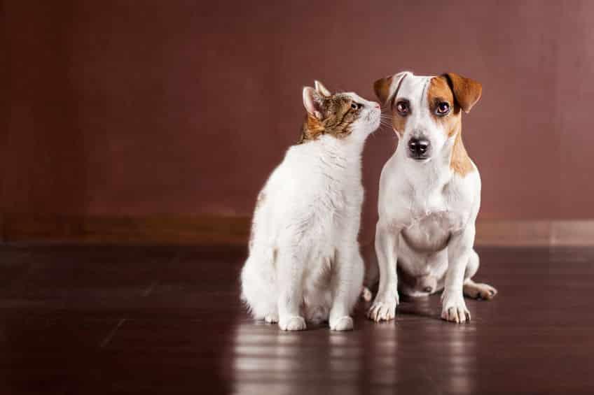 """もともと一緒!猫と犬は""""ミアキス""""という動物が分かれて進化したという雑学まとめ"""