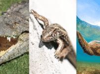 ワニ・トカゲ・カメは卵を温める砂の温度で「性別」が決まるという雑学