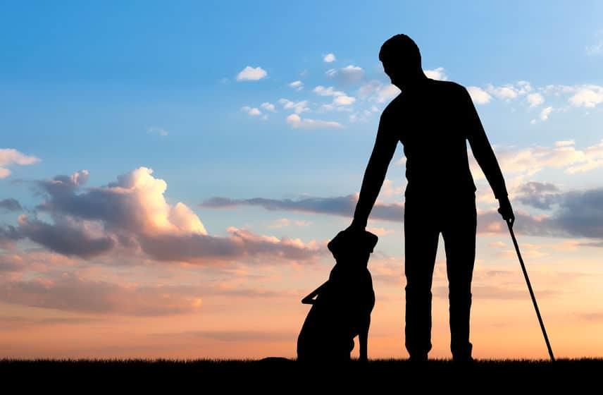 カッコいいから?盲導犬に英語で指示を出すのはなぜ?【動画】についてのトリビアまとめ
