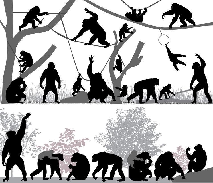 チンパンジーとゴリラの握力がスゴすぎる。凶暴性はある?という雑学まとめ