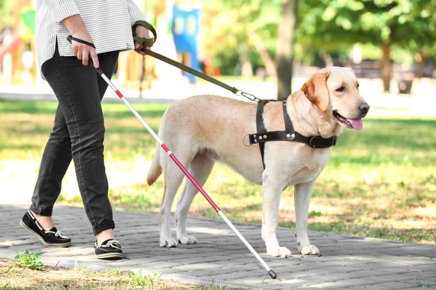 盲導犬に話しかけてはいけない?というトリビア