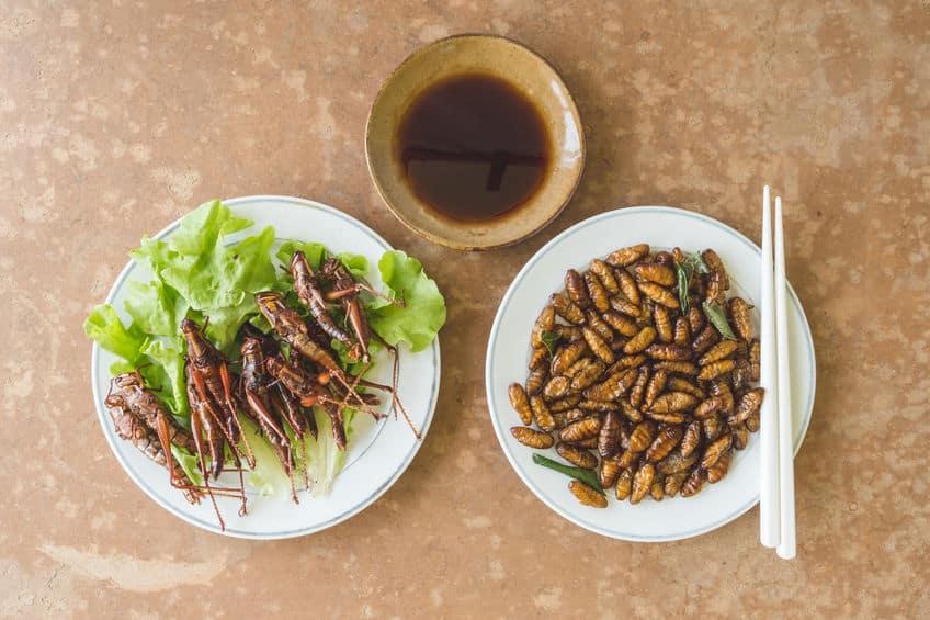 原料がイヤすぎる…!ベルギーでは虫のハンバーグが発売されていた【昆虫食】についてのトリビアまとめ