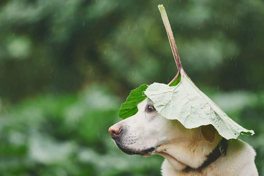 雨の雑学まとめ
