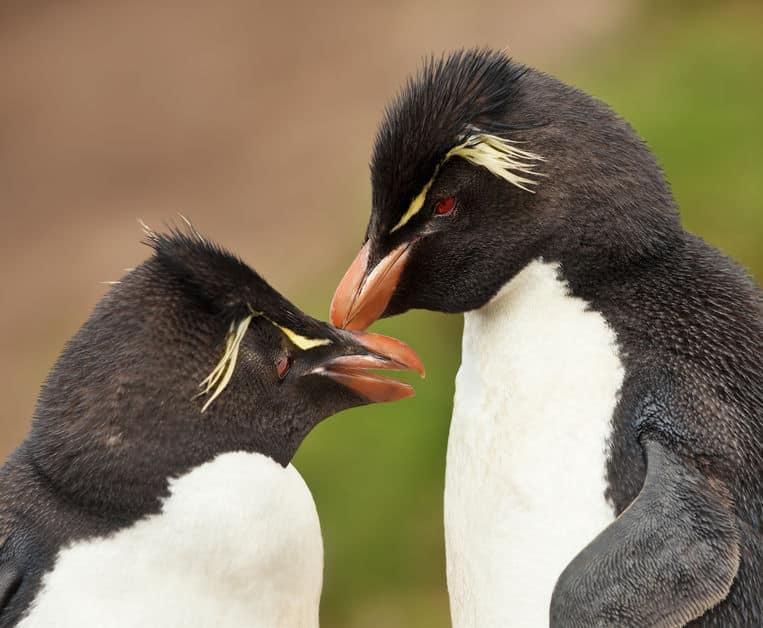 ペンギンは遠距離恋愛が得意という雑学