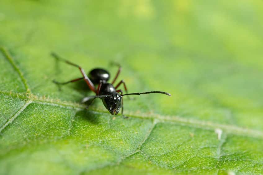 シロアリ以外のアリは全て「ハチ」?に関する雑学