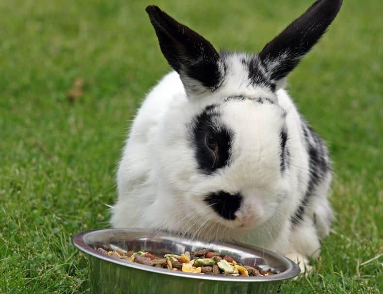 ウサギの腸は短いため、2回に分けて植物を消化吸収するというトリビア