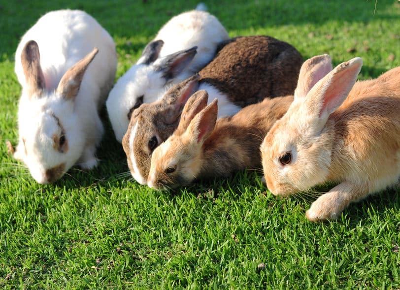 """可愛いイメージが…!ウサギは自分の""""ウンチ""""を食べるという雑学まとめ"""