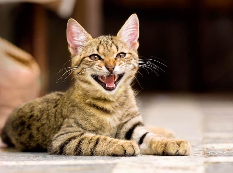 猫も鳩も蚊も…動物の鳴き声から生まれた漢字があるという雑学まとめ
