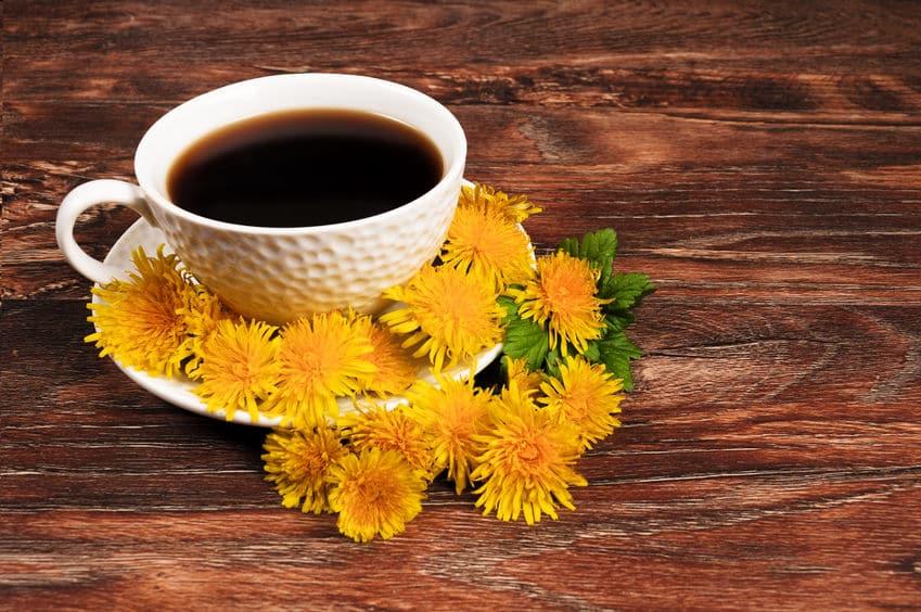 タンポポからコーヒーを作ることができるというトリビア