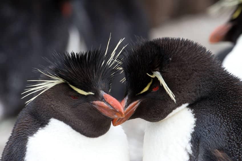 繁殖期のパートナーを生涯変えない種類のペンギンもいるというトリビア