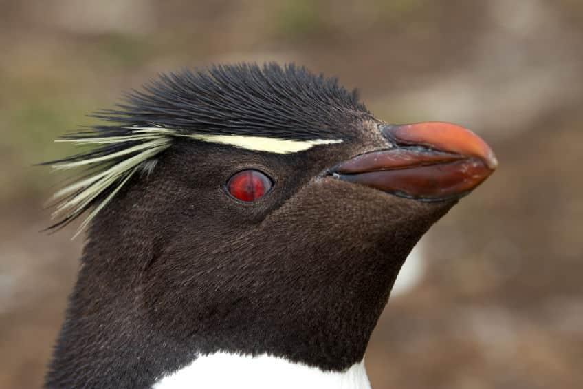 ペンギンの視力についてのトリビア