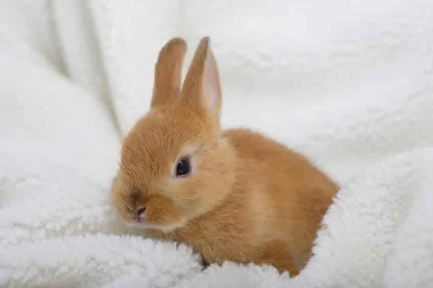 """人気すぎる…!日本では明治時代に""""ウサギ税""""があったという雑学まとめ"""