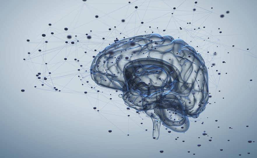 脳細胞は子供時代に形成され、大人になると分裂が止まる!というトリビア