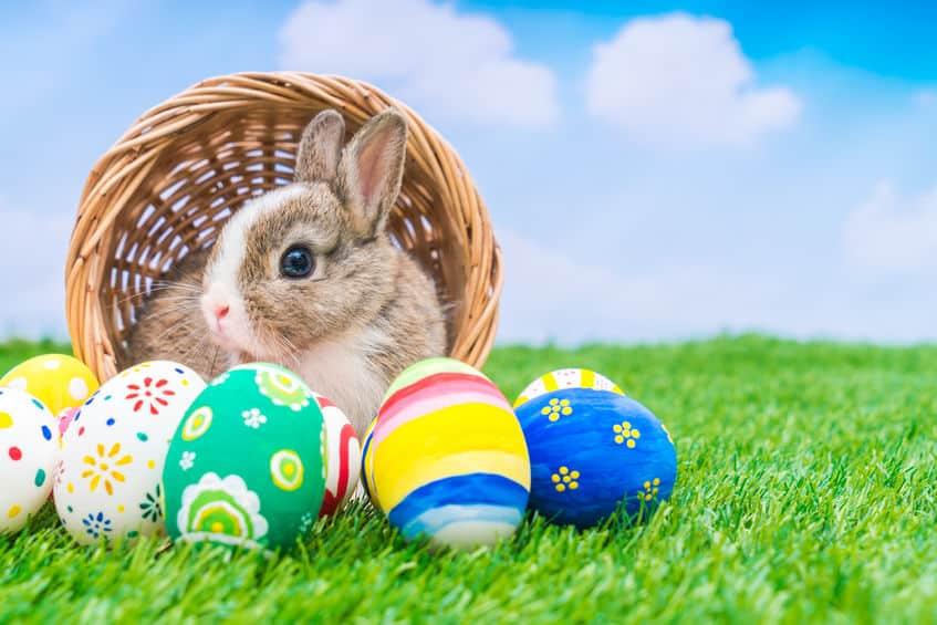 ウサギの雑学まとめ