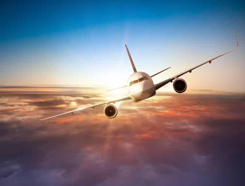 サバンナの掃除屋・マダラハゲワシは上空11,278mで飛行機と衝突したというトリビア