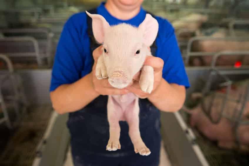 古代ヨーロッパで豚小屋の番人は使用人のトップ階級。それに値する重大な責務という意味が込められているというトリビア