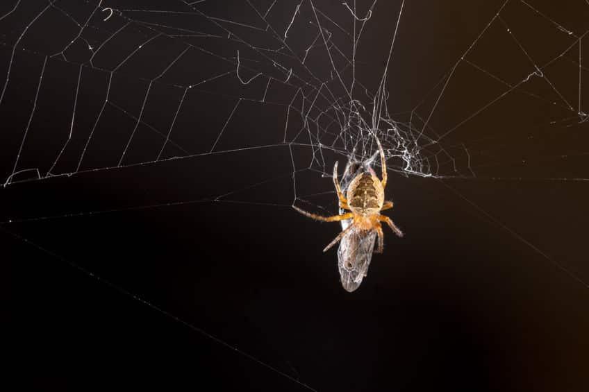 網をはらないクモがいる?に関する雑学
