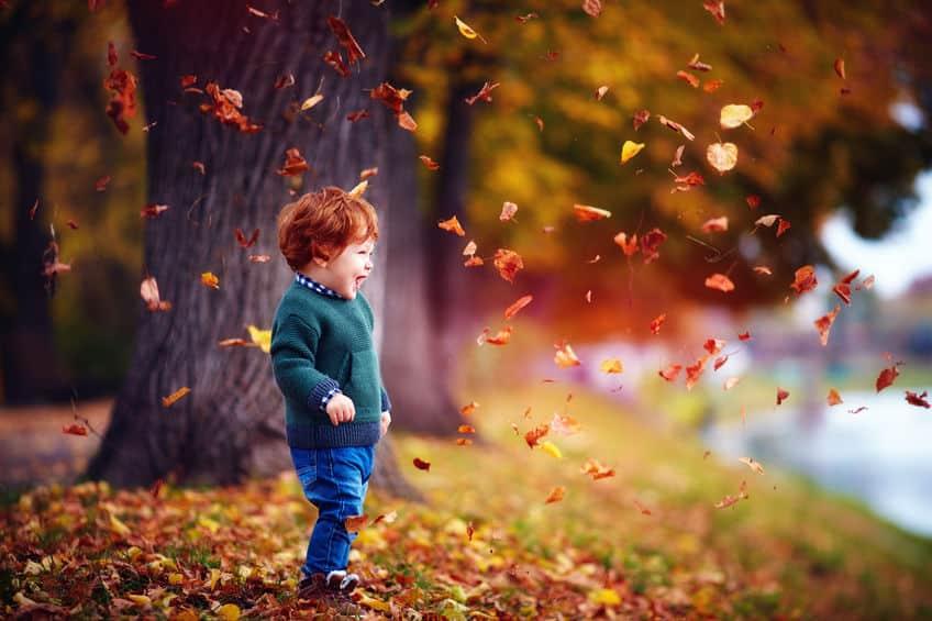 雪と寒さに負けない工夫!冬になると樹木の落ち葉が増えるのかについての雑学まとめ