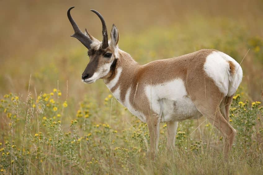 世界で2番目に走るのが速い動物についてのトリビア