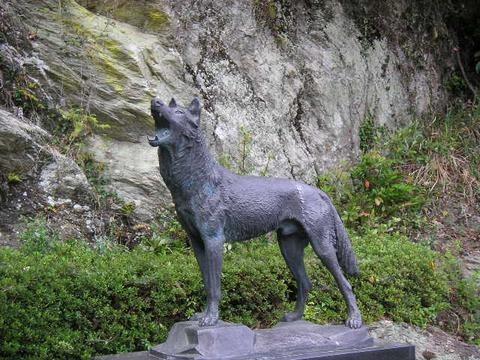 """人間のせいかも…。""""ニホンオオカミ""""が絶滅した理由についての雑学まとめ"""