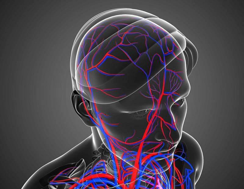 ネクタイを巻くと脳の血流が下がる?というトリビア