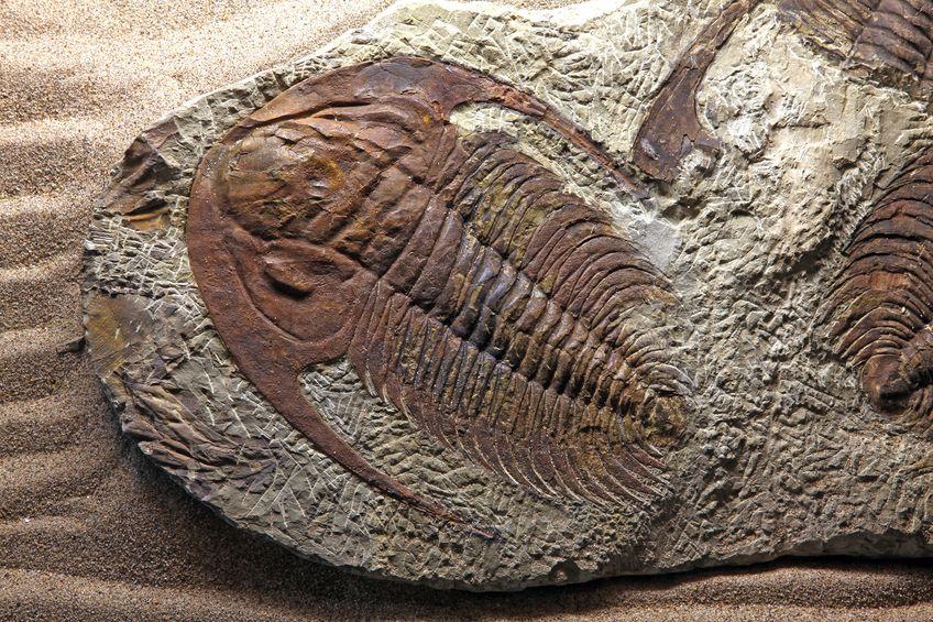 昆虫には祖先となる化石が見つかっていないという雑学