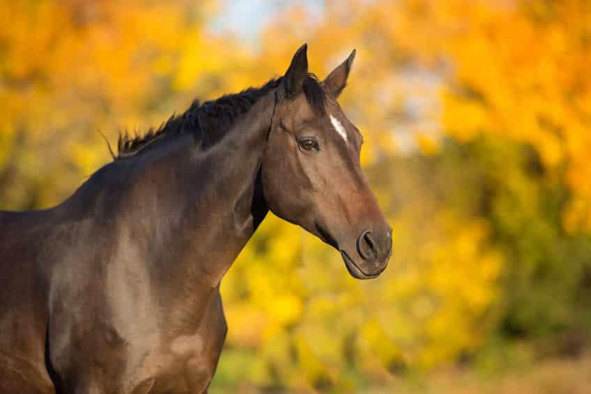 馬の雑学まとめ