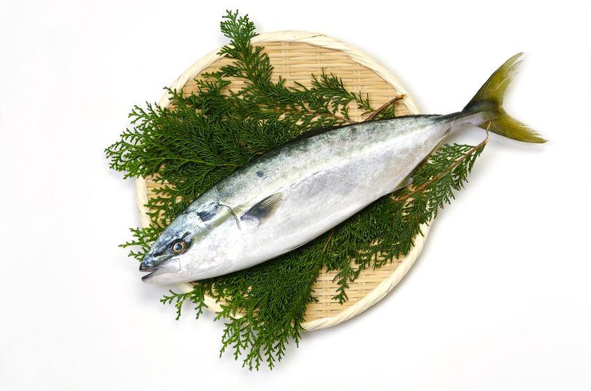 見た目も味も違うけど…?ブリとハマチは同じ魚【出世魚】についてのトリビアまとめ
