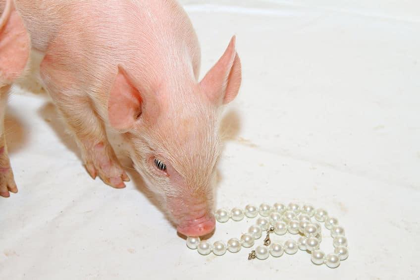 「豚に真珠」も聖書の言葉だった!というトリビア