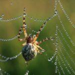 クモにカフェインを与えるとおかしな巣を作るについての雑学