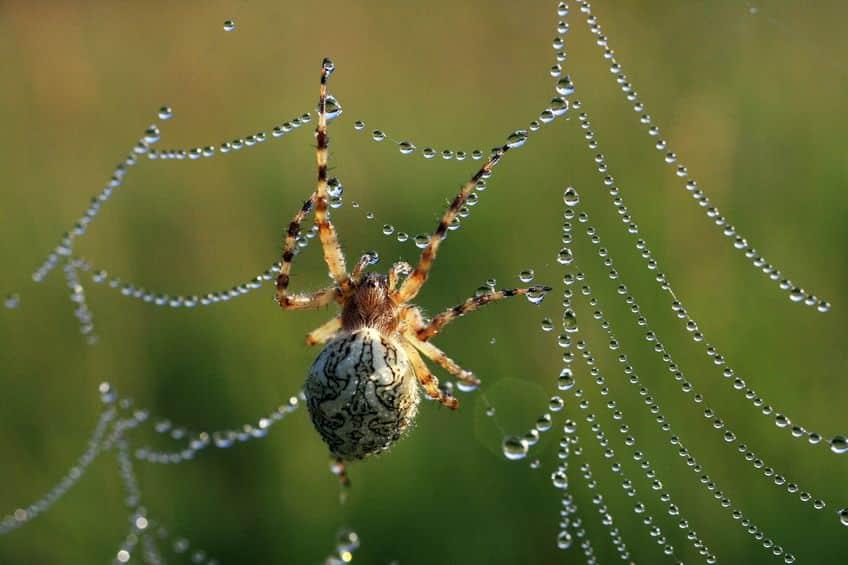 クモにカフェインを与えるとおかしな巣を作るという雑学