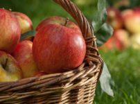 地球温暖化でリンゴの糖度が上がっているという雑学