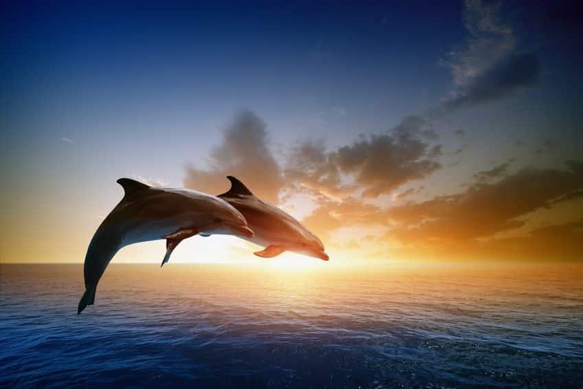 イルカがジャンプすることに関する雑学