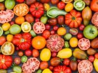 トマトの品種が驚きの進化をしているという雑学