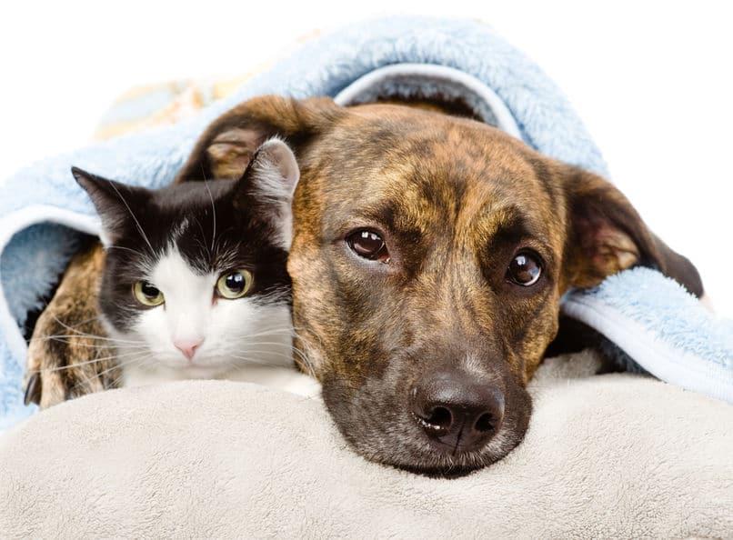 犬や猫は汗をかかない?というトリビア
