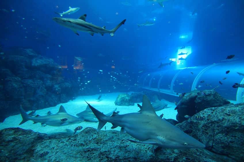 水族館のサメはなぜ同じ水槽の魚を食べないのかという雑学