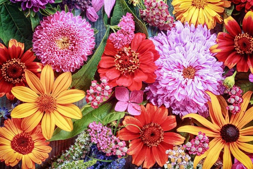 エディブルフラワー(食用花)は栄養価の高い優秀食材という雑学