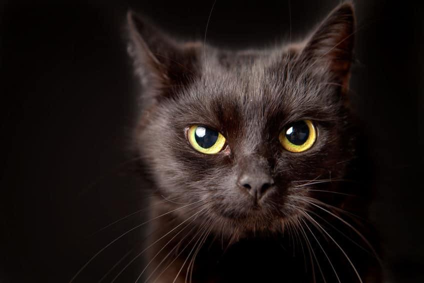 「吾輩」の名前は「猫」!漱石と愛猫の絆についてのトリビア