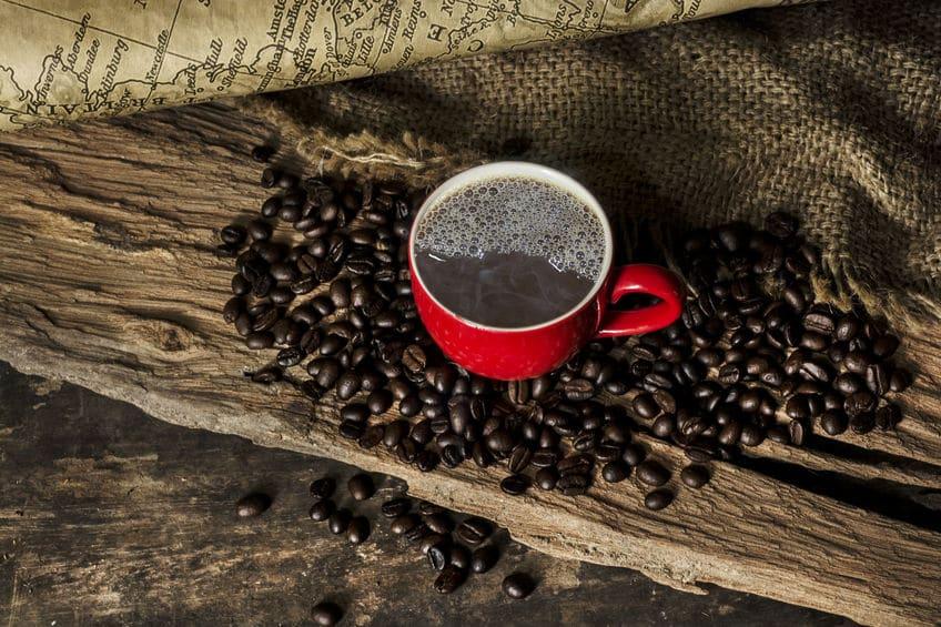 変な巣が…!クモにカフェインを与えると酔っぱらうという雑学まとめ