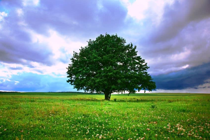 トトロに似た樹木や岩があるというトリビア