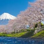 桜が土手沿いに多いのはなぜ?という雑学