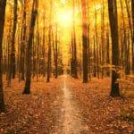 紅葉した葉は光合成ができなくなるという雑学