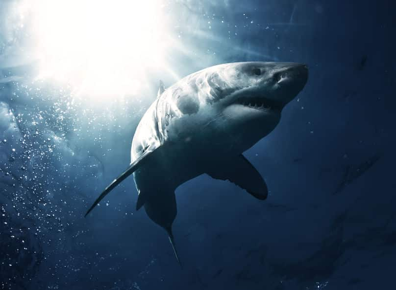 サメの雑学まとめ