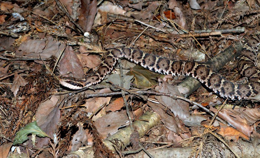 日本にいる毒蛇の種類についてのトリビア